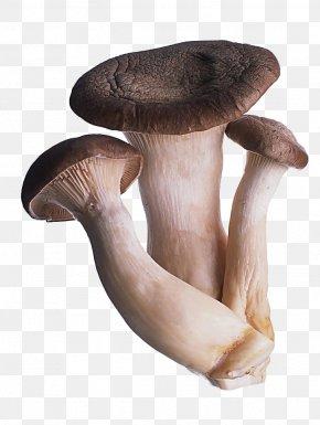 Mushroom Fungus - Oyster Mushroom Fungus Shiitake Food PNG
