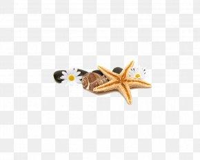 Starfish - Spa Stone Massage Cosmetology PNG