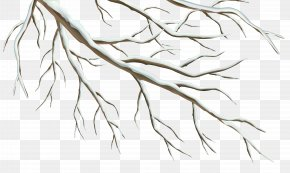 Winter Branch Clipart Image - Branch Winter Clip Art PNG