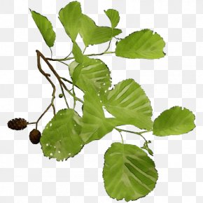 Food Plant Stem - Leaf Plant Flower Tree Flowering Plant PNG