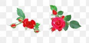 Rose - Garden Roses Flower Digital Image Clip Art PNG