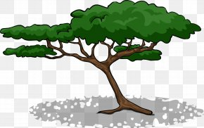 Tree - Branch Acacia Tree Clip Art PNG