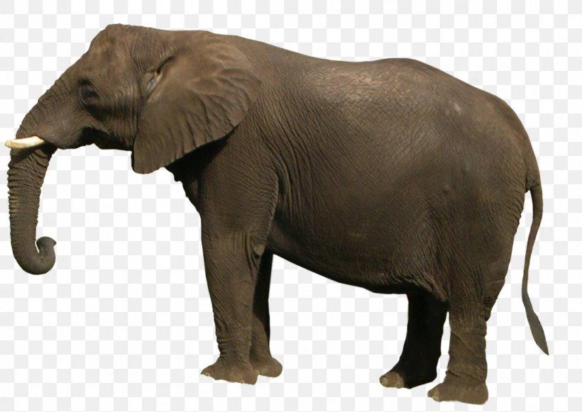 African Bush Elephant Asian Elephant, PNG, 1097x778px, African Bush Elephant, African Elephant, African Forest Elephant, Asian Elephant, Elephant Download Free