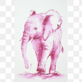 India - Indian Elephant African Elephant Watercolor Painting Drawing Pink M PNG