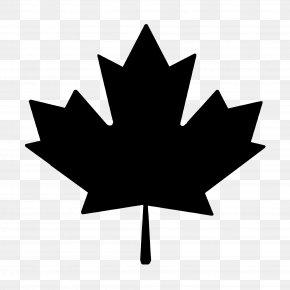 Maple Leaf - Maple Leaf Sugar Maple Clip Art PNG