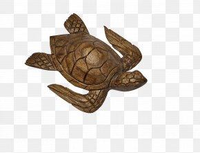 Woodcarving - Box Turtle Sea Turtle Tortoise Wood PNG