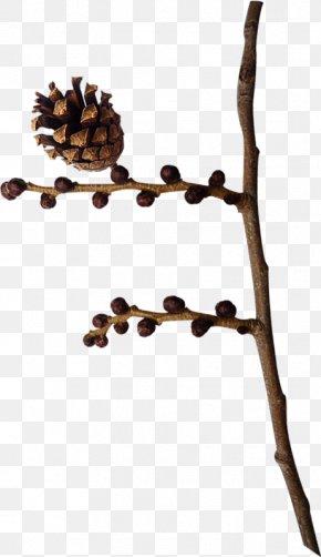 Leaf - Twig Branch Leaf Plant Stem Tree PNG