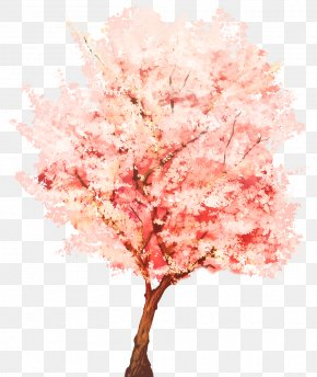 Cherry Blossom Watercolor - Tree SketchUp Plant Webtoon Watercolor Painting PNG