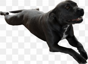 Dog Breed Cane Corso Data Compression Sporting Group PNG