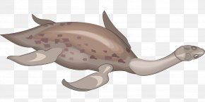 Creatures Clipart - Fish Fin PNG