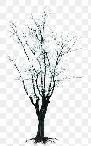 Winter Snow Branches Creative - Tree Branch Winter Clip Art PNG
