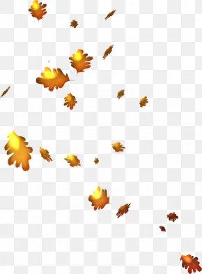Autumn - Autumn Leaves Clip Art PNG