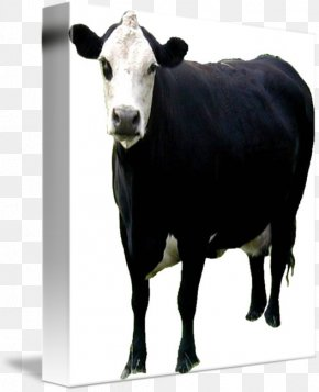 Bull - Dairy Cattle Calf Angus Cattle Beef Cattle Ox PNG