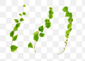 Green Vines PNG