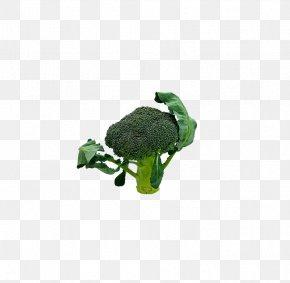 Broccoli - Broccoli Vegetable Food PNG