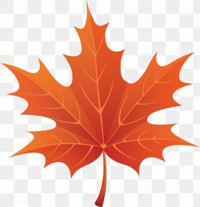 Maple Leaf - Fall Leaves Fall! Autumn Leaf Color PNG