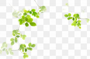 Leaf - Leaf Green Euclidean Vector PNG