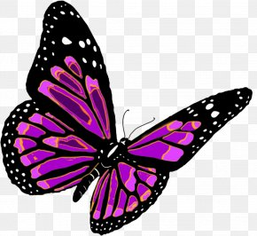 Flying Butterfly Image - Butterfly Clip Art PNG