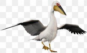 Peafowl - Bird Pelican Penguin Clip Art PNG