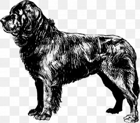 Giant Dog Breed Sussex Spaniel - Dog Tag PNG