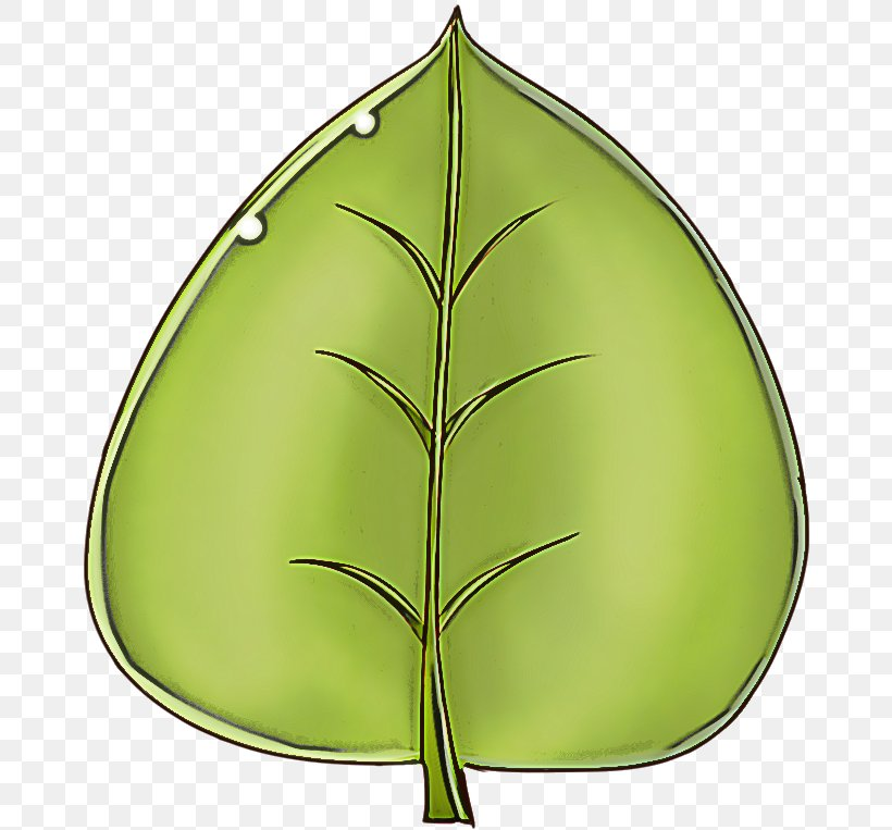 Leaf Green Plant Tree Clip Art, PNG, 670x763px, Leaf, Green, Plant, Tree Download Free
