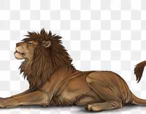 Lion - Lion Roar Mane Big Cat Male PNG