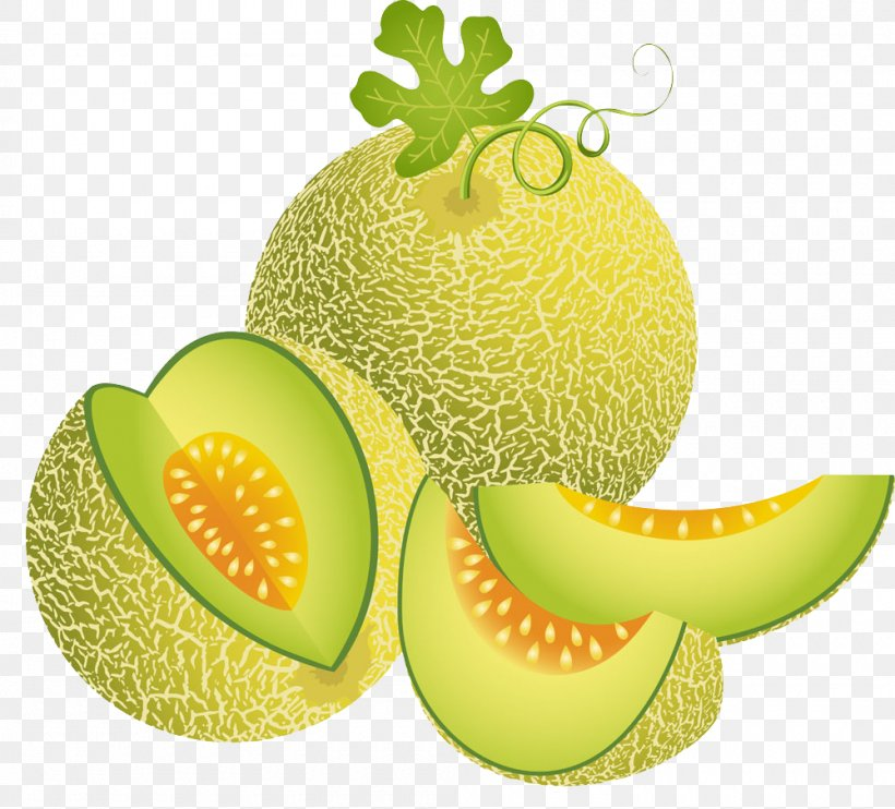 Cantaloupe Melon Illustration Png 1000x906px Cantaloupe Cucumber Gourd And Melon Family Diet Food Drawing Food Download Cantaloupe illustration png and clipart. cantaloupe melon illustration png