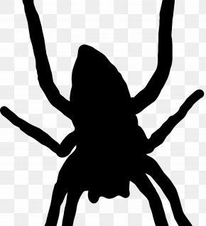 Spider - Spider Web Silhouette Arthropod Clip Art PNG