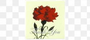 Cut Flowers Carnation Parents' Day Teachers' Day PNG