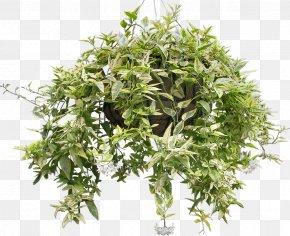 Bushes - Houseplant Clip Art PNG