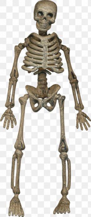 Halloween Skeleton Skull - Human Skeleton Homo Sapiens Bone PNG