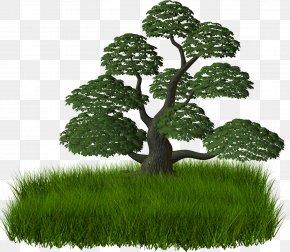 Tree Top - Shrub Treelet Clip Art PNG