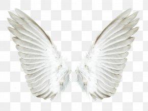 Wings - Aile Angel PNG