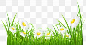 White Daisies And Grass Transparent Clip Art Image - Common Daisy Clip Art PNG