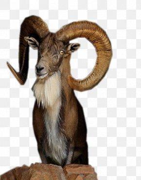 Hand-painted Goat - Eid Al-Adha Bayram Eid Al-Fitr Sacrifice Religion PNG