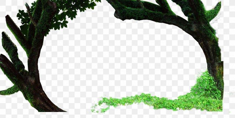 Twig Leaf Tree Deciduous Shrub, PNG, 1559x784px, Twig, Arborvitae, Branch, Broadleaved Tree, Conifers Download Free