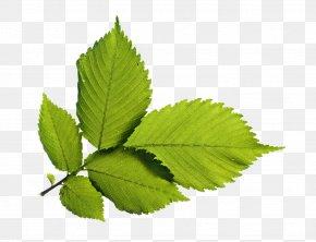 Green Leafs - Green Wallpaper PNG