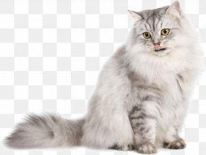 Cat Transparent Background - Siberian Cat Persian Cat Ragdoll Norwegian Forest Cat Burmese Cat PNG