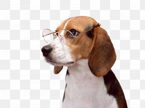 Puppy - Beagle-Harrier Puppy Desktop Wallpaper PNG