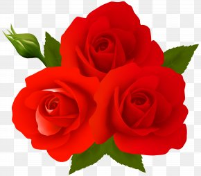 Roses Clip Art - Garden Roses Centifolia Roses Clip Art PNG