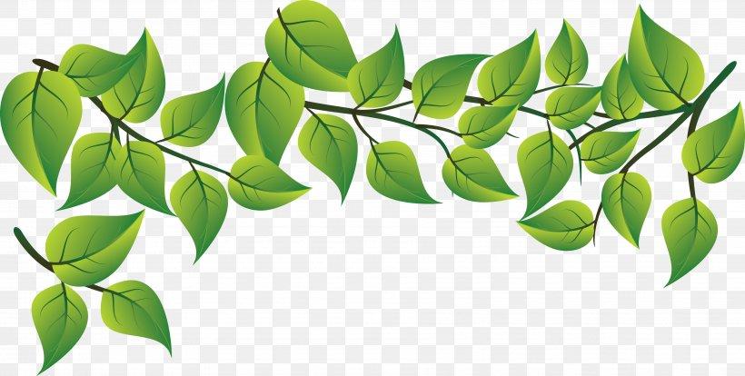 Leaf Plant Green Tree Flower, PNG, 3605x1822px, Leaf, Branch, Flower, Flowering Plant, Green Download Free