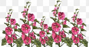 Wildflower Pink Family - Flower Flowering Plant Plant Cut Flowers Pink PNG