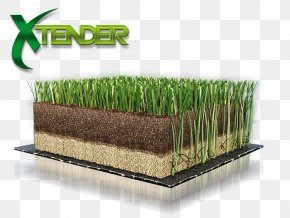 Tender - Lawn Artificial Turf Green FIFA 18 Wheatgrass PNG