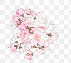 Pink Cherry Blossom - Cherry Blossom Illustration Image Drawing PNG