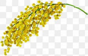 Flower Plant - Yellow Plant Flower PNG