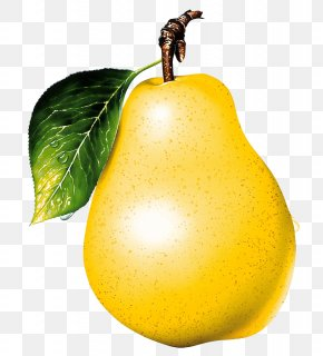 Ripe Yellow Pear Image - Asian Pear Pyrus × Bretschneideri Pyrus Nivalis Fruit PNG