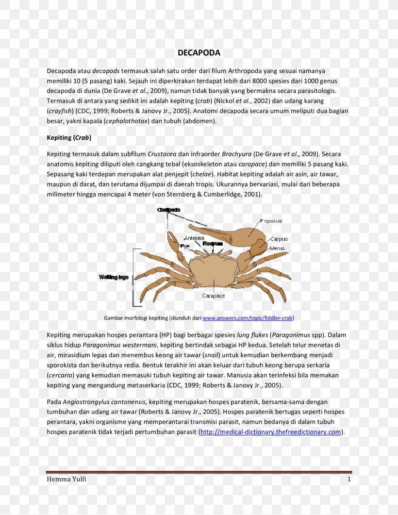 Fiddler Crab Animal, PNG, 1700x2200px, Crab, Animal, Area