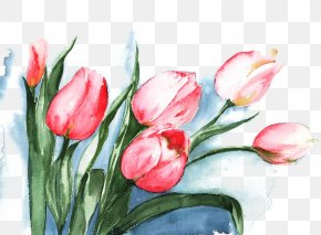 Pink Tulips Watercolor Picture Material - Tulip Watercolor Painting Flower PNG