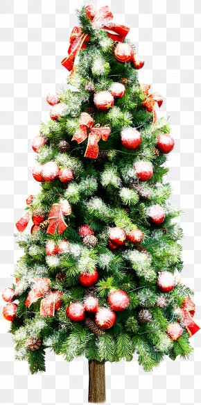 Christmas Tree Festival - Christmas Tree Gift Wedding Baby Transport PNG