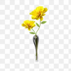 Chrysanthemum Flowers - Chrysanthemum Petal Cut Flowers PNG